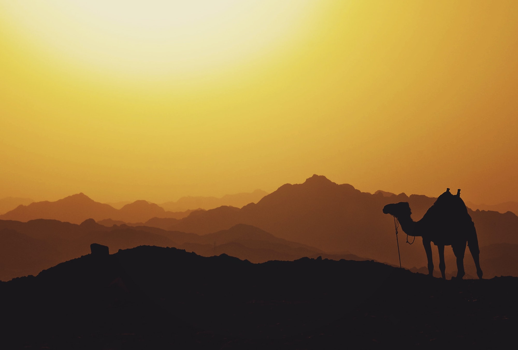 Thumb image for the post on Addiction Overseas: The Middle East